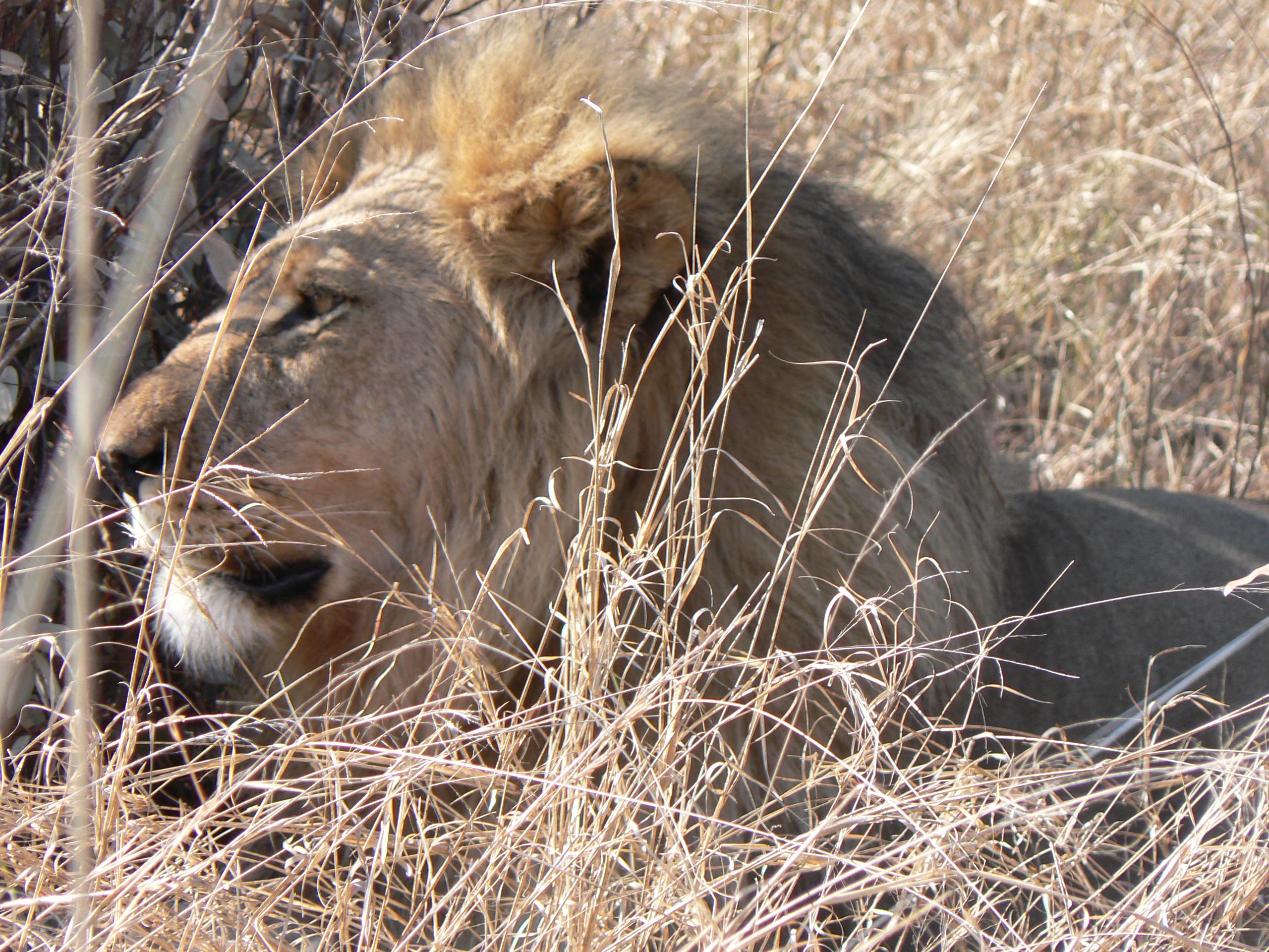 Hwange National Park, Zimbabwe, 2011