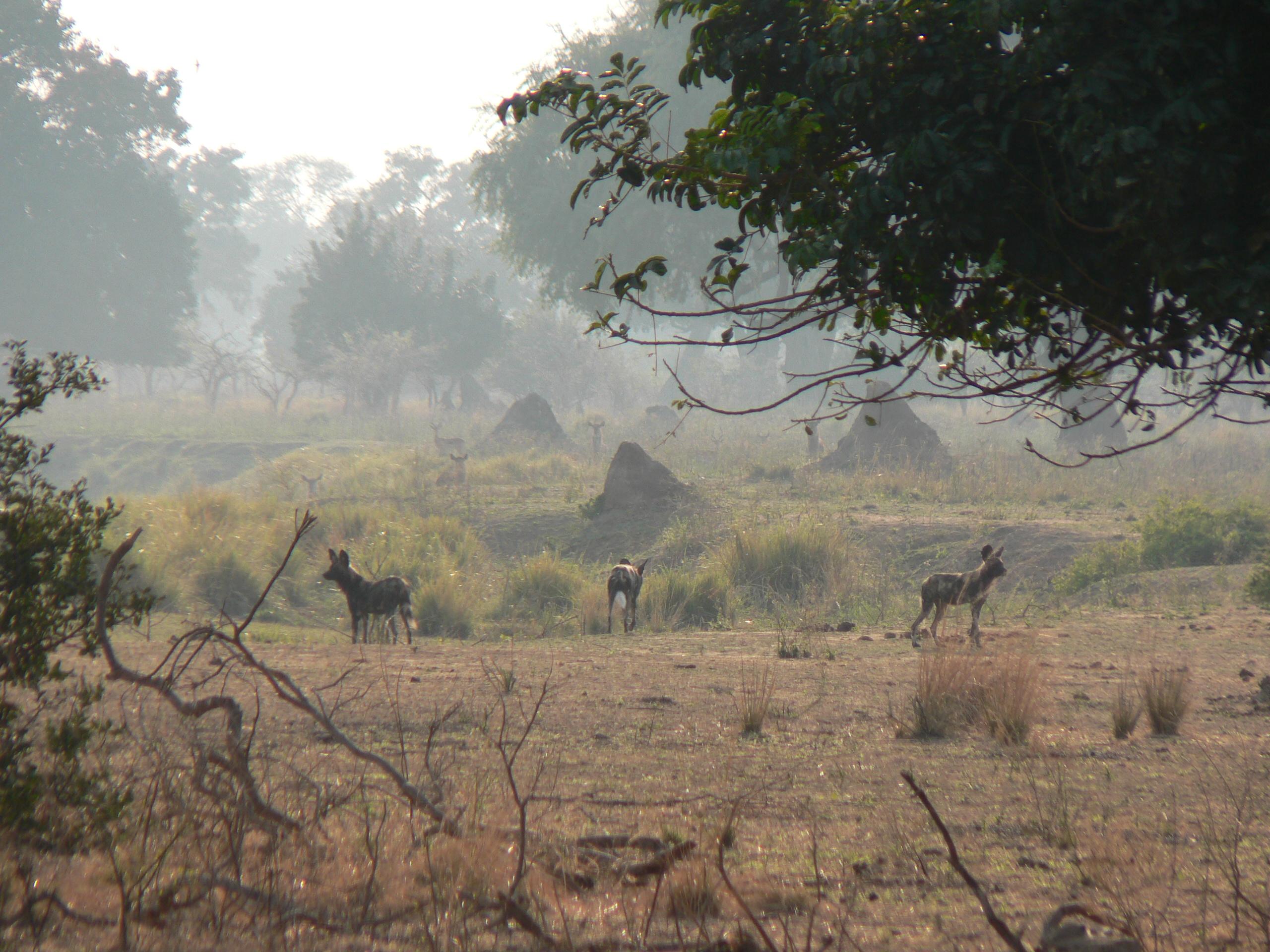 Mana Pools National Park, Zimbabwe, 2011