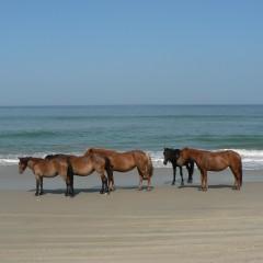 Visiting the Outer Banks, North Carolina