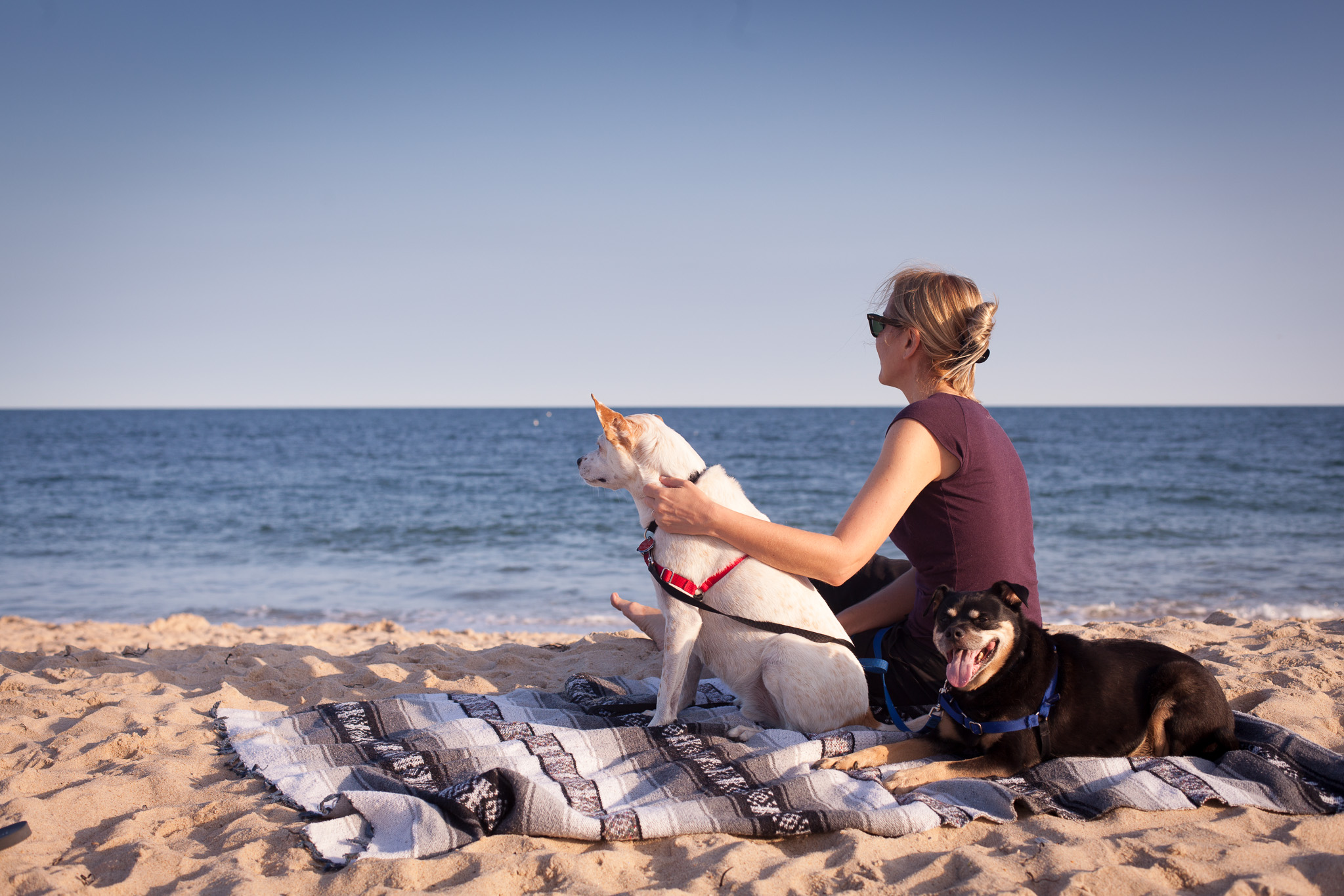 Dog Days of Summer in the Hamptons