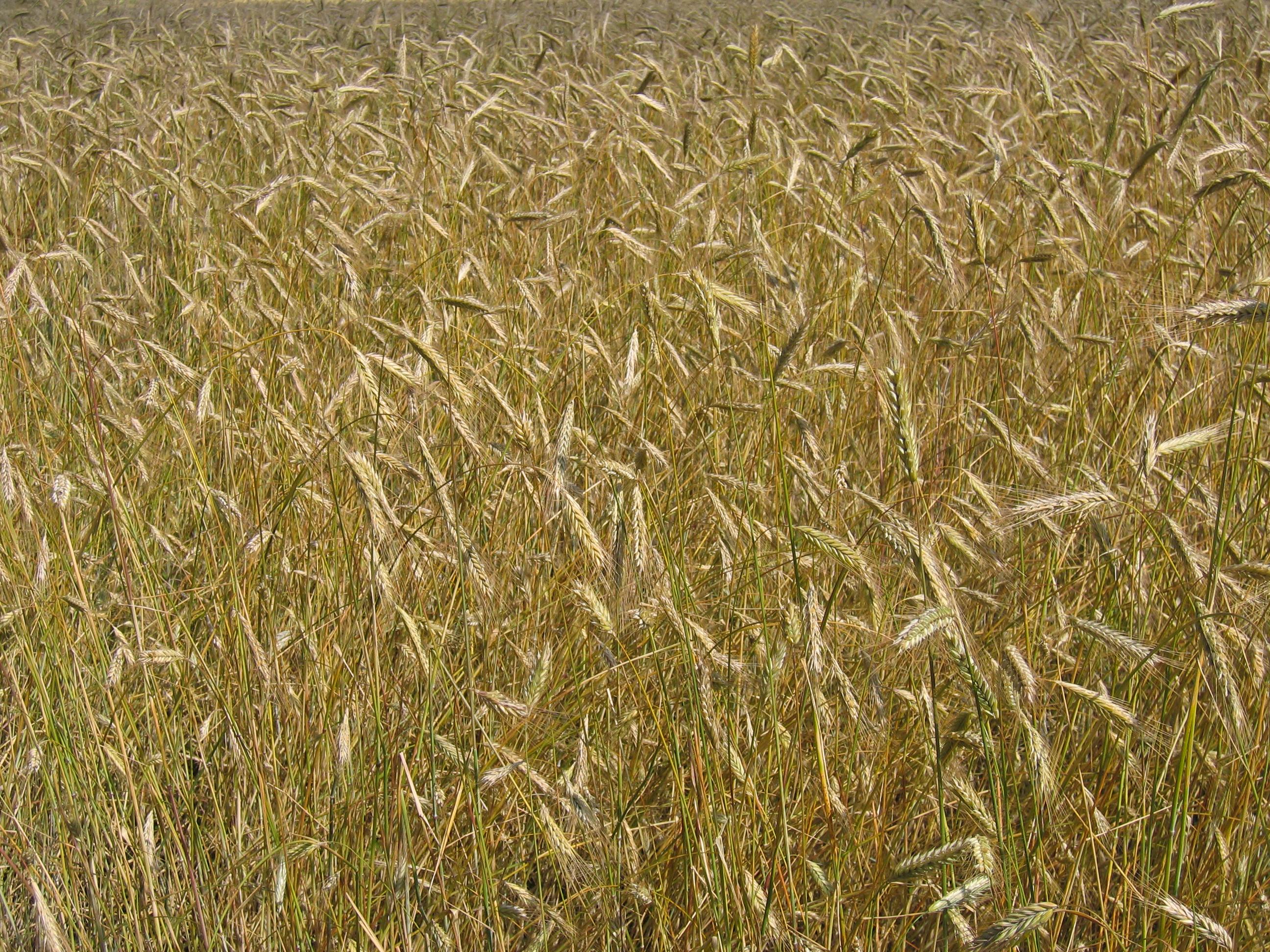How Farm Subsidies (Mal)Function