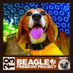 Beagle-Cover-2013